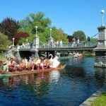 Swan Boats Open and More Cheap Boston Activities