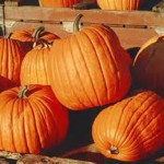 Boston area hauntings, hayrides, pumpkin patches, apples, and more